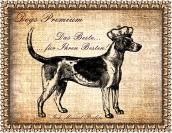 Logo Dogs-Premium